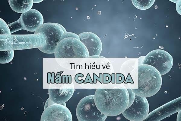 Điểm qua các thông tin về loại nấm Candida